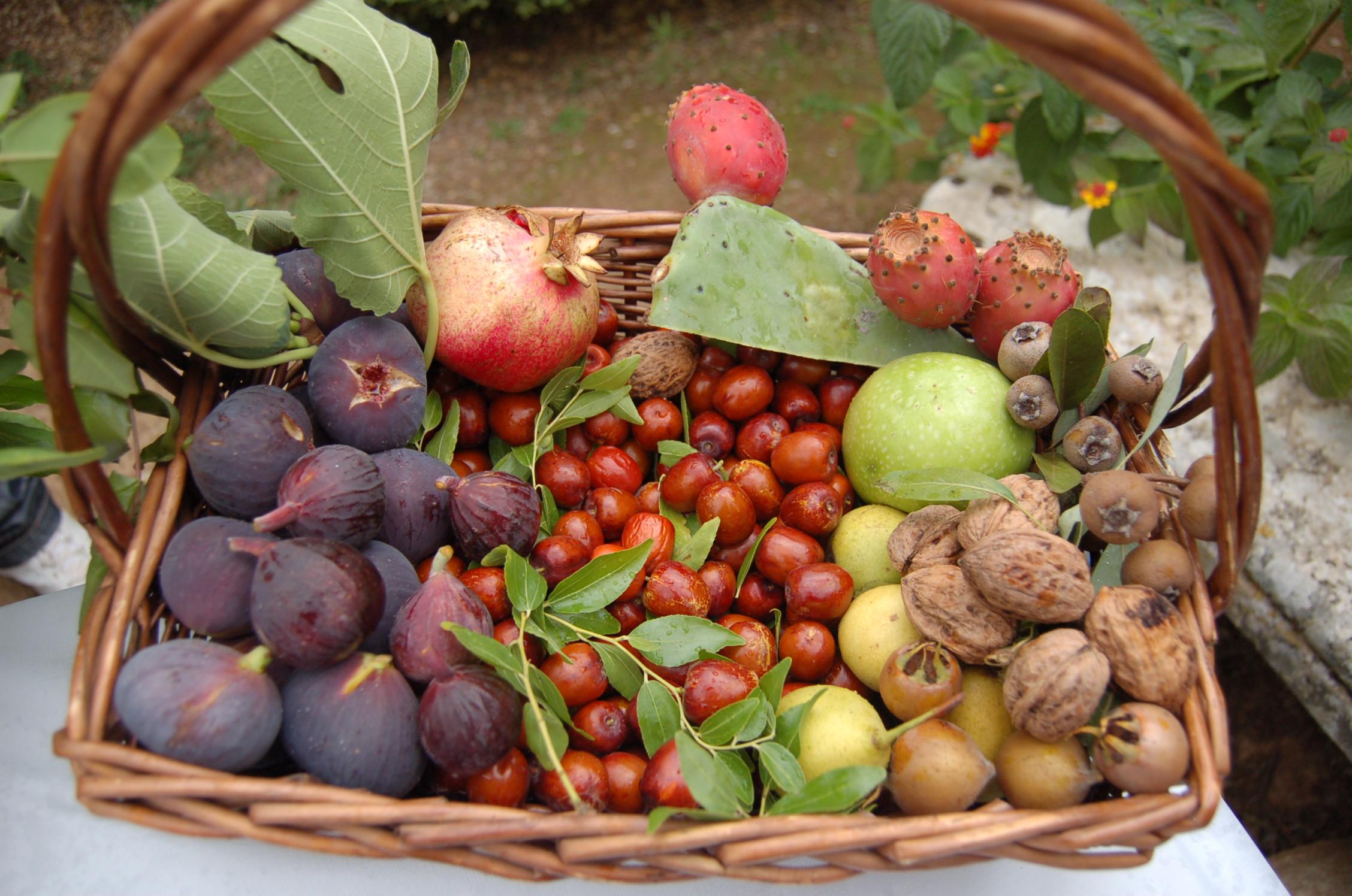 Coltivare i frutti antichi tra scoperta e tradizione: dalle loro caratteristiche a come trapiantarle e curarle