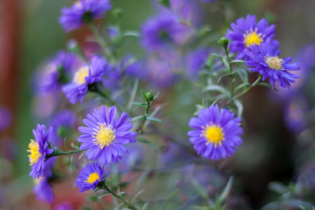 Fiori a settembre: le 7 piante più belle per decorare il vostro balcone e giardino